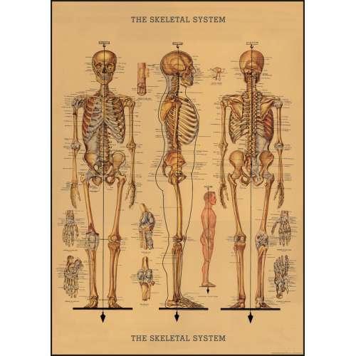Poster Affiche vintage, le squelette