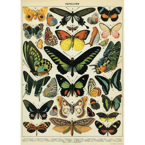 POSTER AFFICHE VINTAGE, Les Papillons