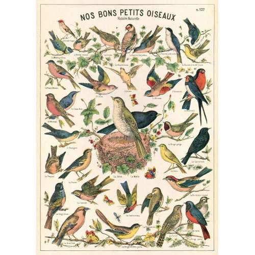 Affiche, Poster, les Oiseaux - CAVALLINI