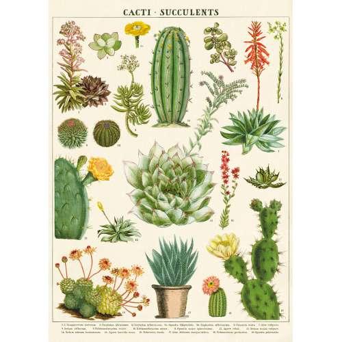Affiche Poster sur Les Cactus - Cavallini