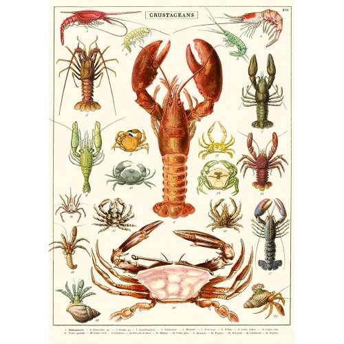 Affiche Poster sur Les Crustacés - Cavallini