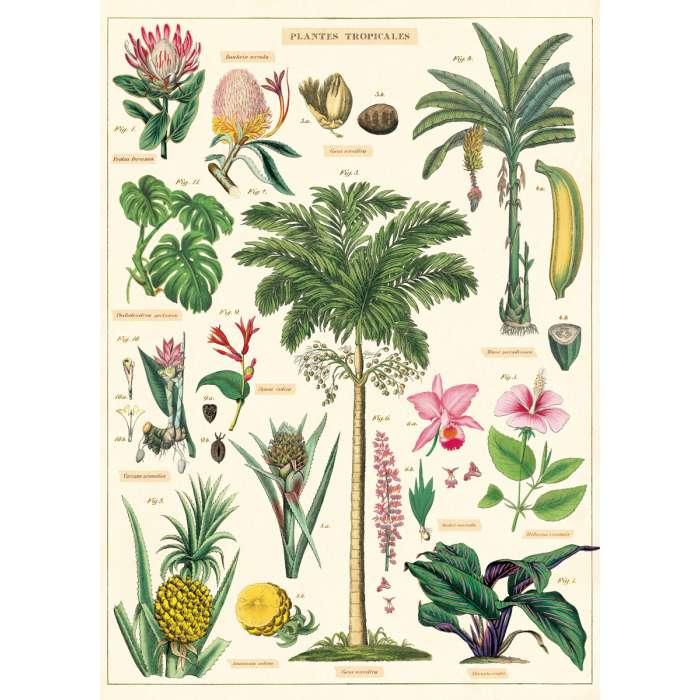 Affiche, Poster, Les Plantes Tropicales