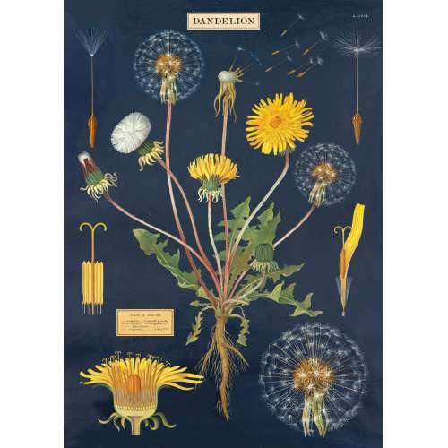 Affiche, Poster, Le Pissenlit, fleur jaune, Rétro