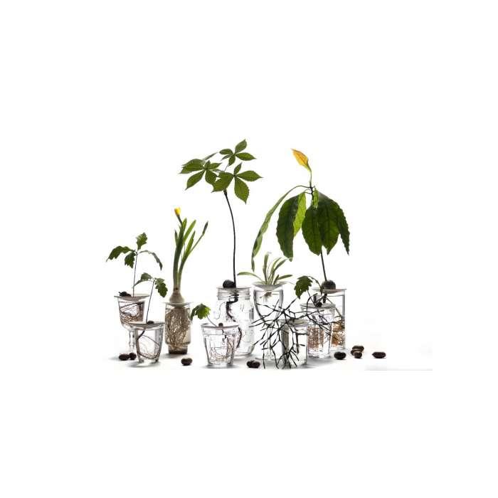 Coupelle de germination en porcelaine, cultiver à la maison.