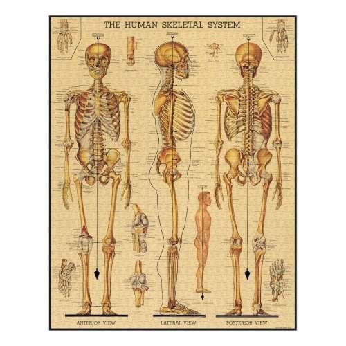 Puzzle 1000pc, le Squelette, vintage